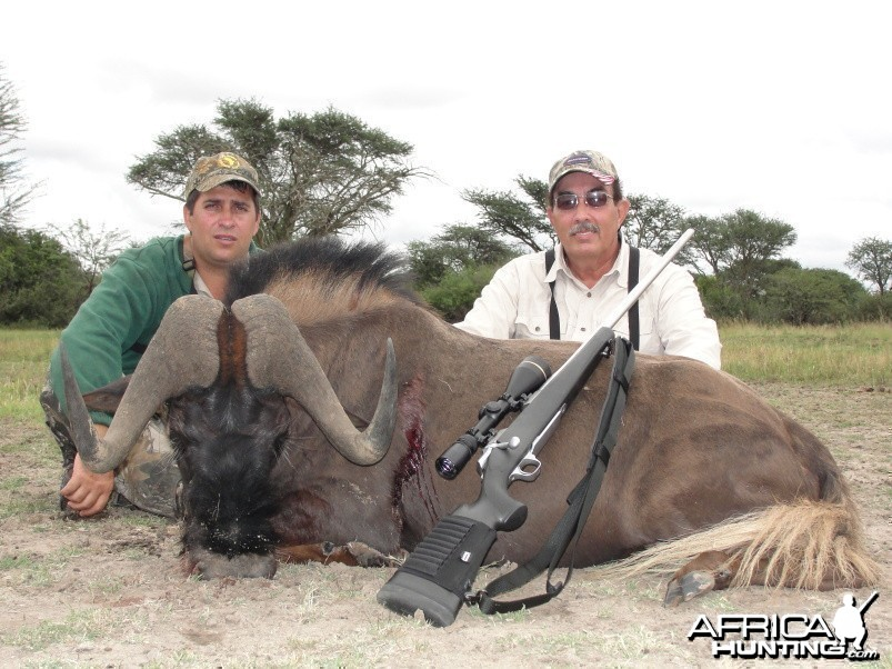 Hunting Black Wildebeest