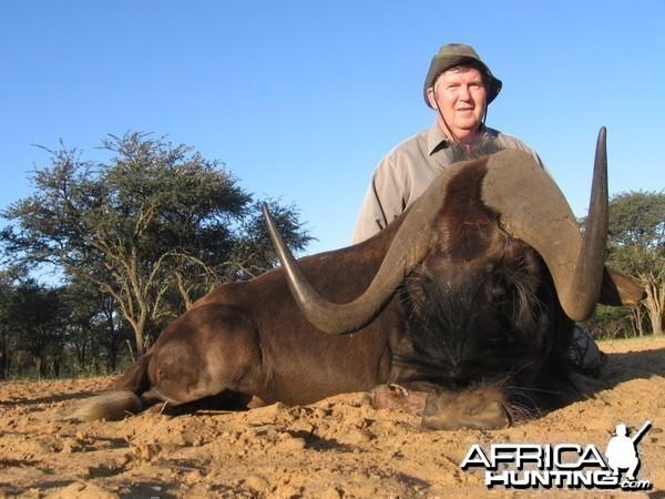 Hunting Black Wildebeest