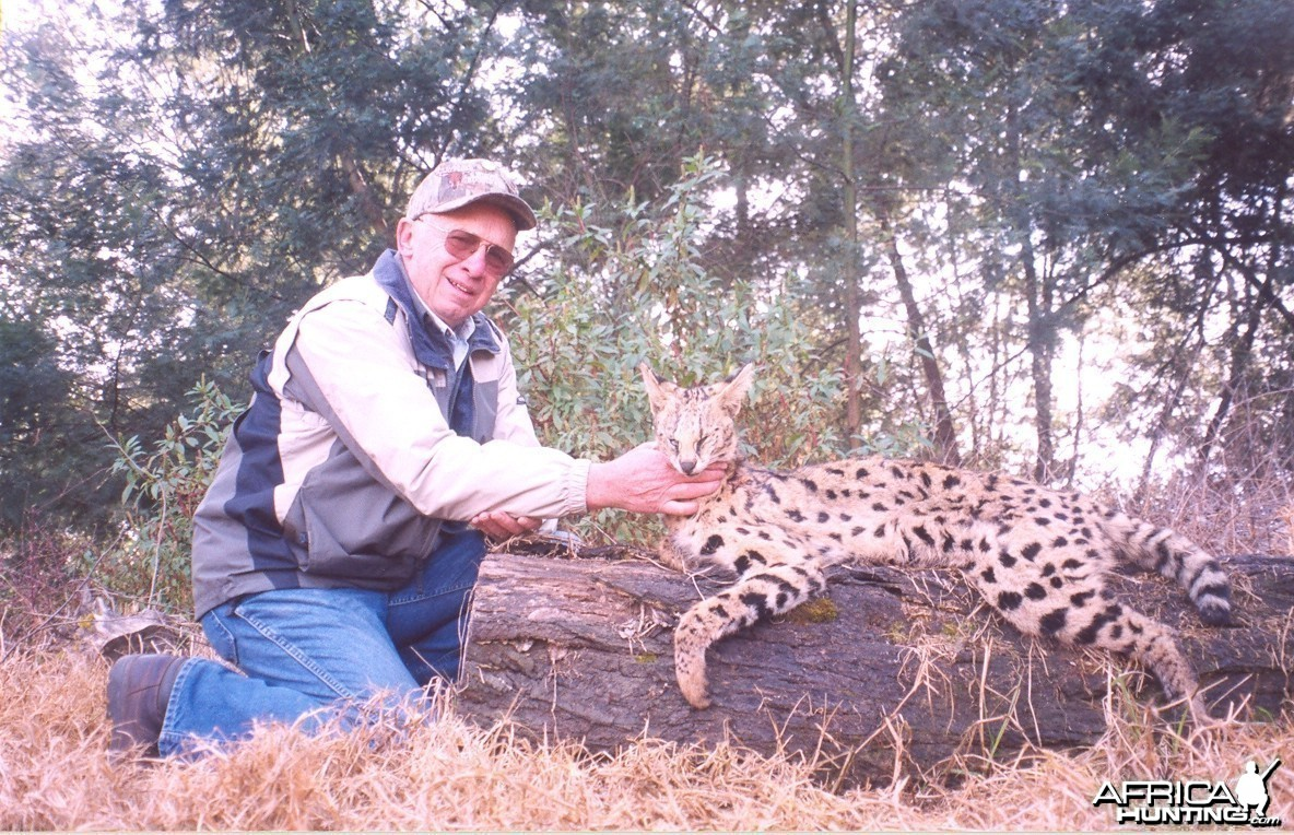 Hunting Serval