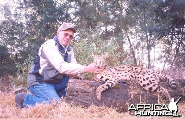 Hunting Serval