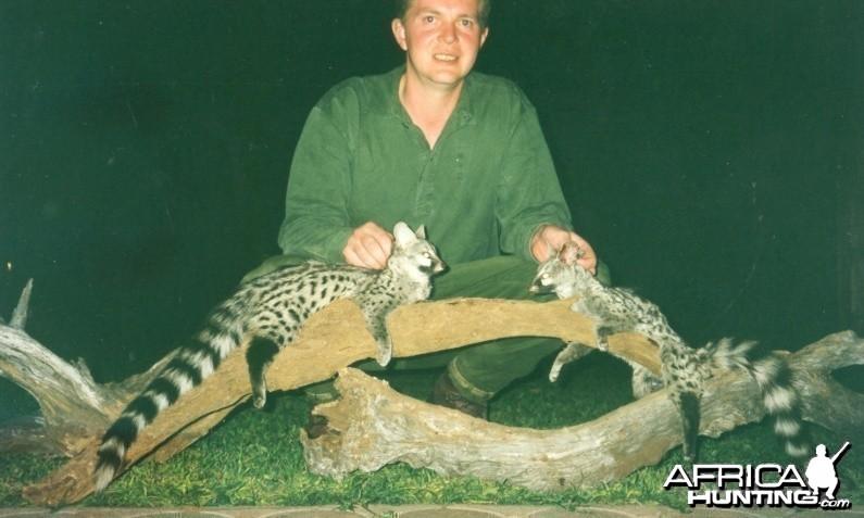 Hunting Genet Cat