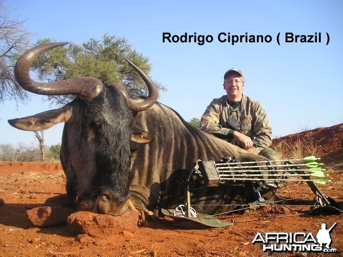 Bowhunting Blue Wildebeest