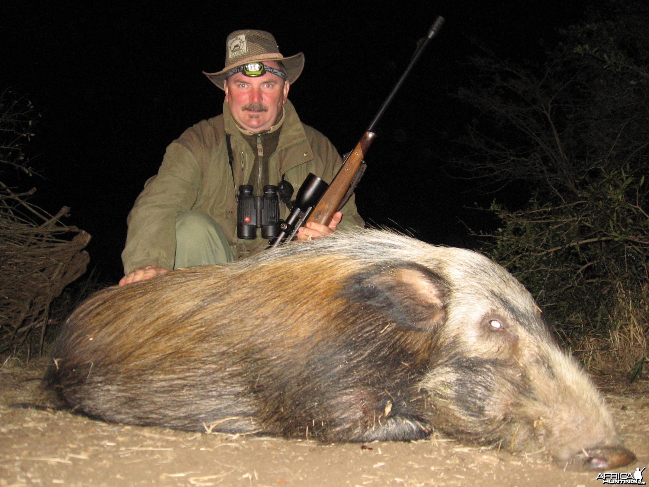Hunting Bushpig