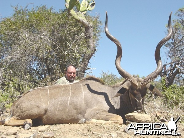 Hunting Cape Kudu 53 inch