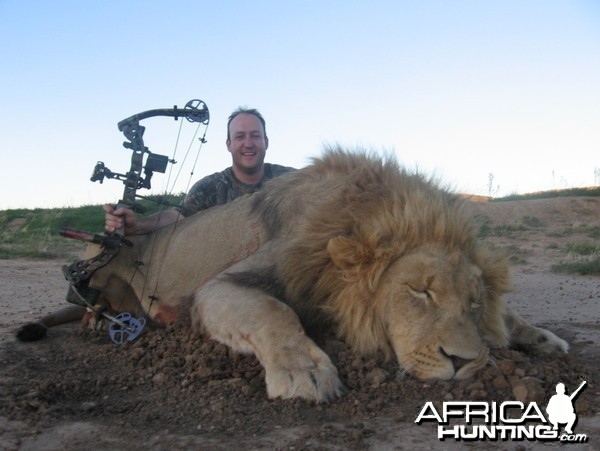 Bowhunting Lion