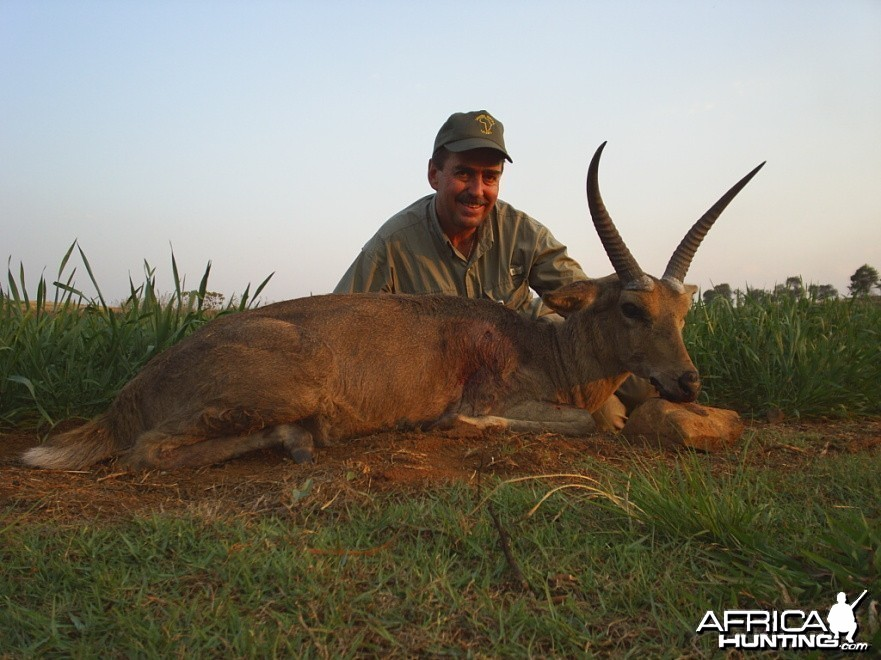 Hunting Common Reedbuck
