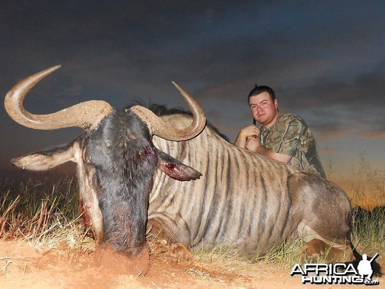 Blue Wildebeest hunt in South Africa with HartzView Hunting Safaris