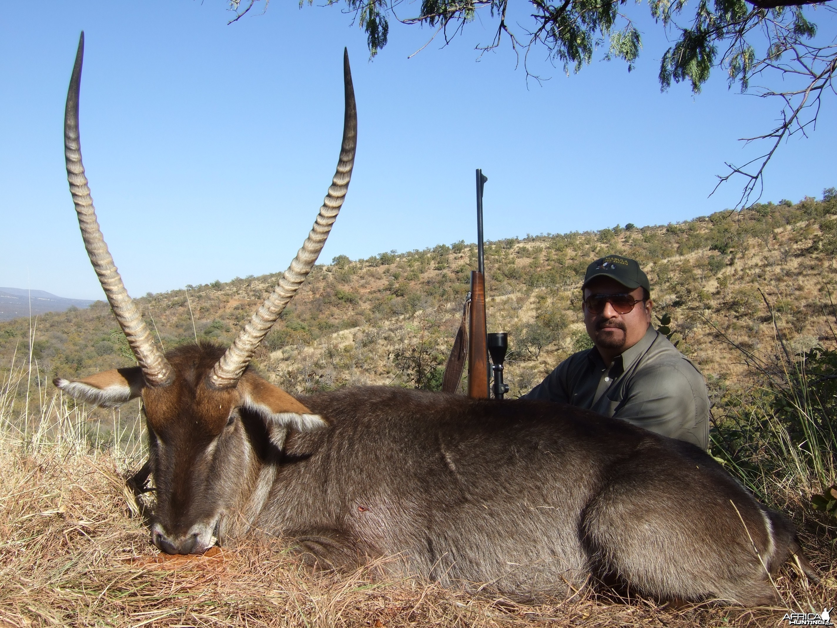 Hunting Waterbuck