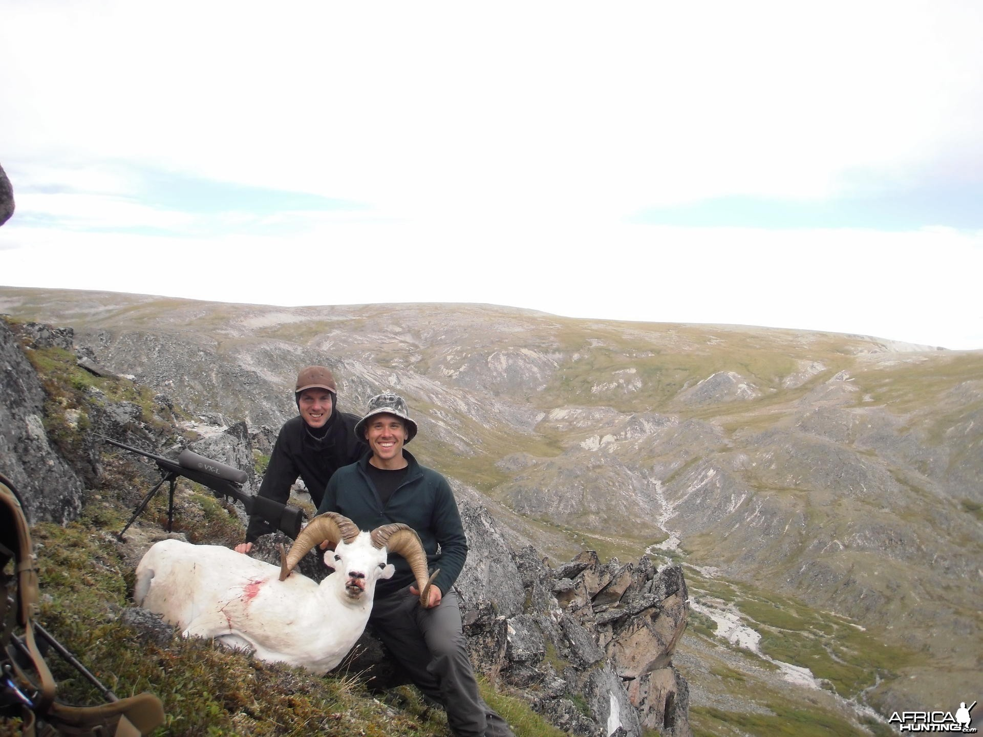 Alaska Dall Sheep Hunt