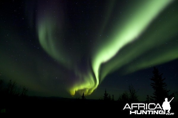 The Northern Lights above an Alaskan Moose camp