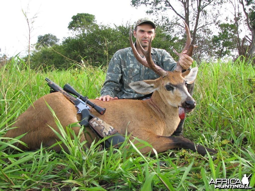 Hunting Swamp Deer