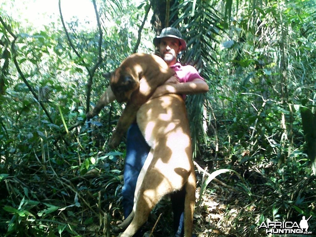 Hunting Cougar