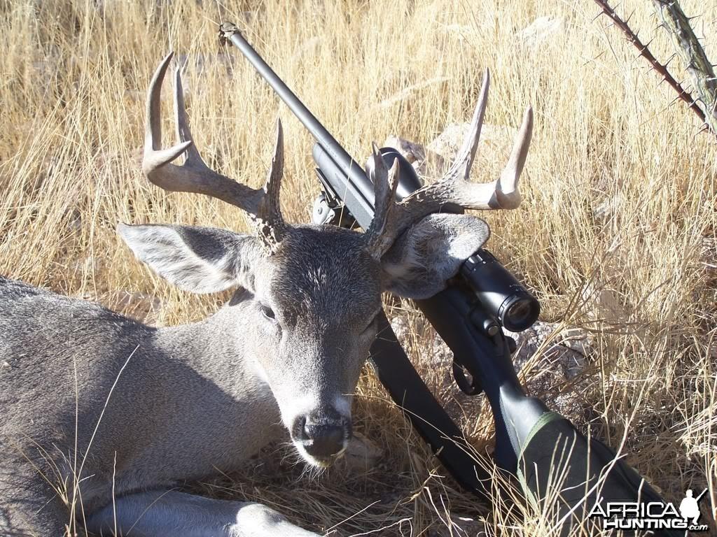 Hunting Coues Deer Arizona