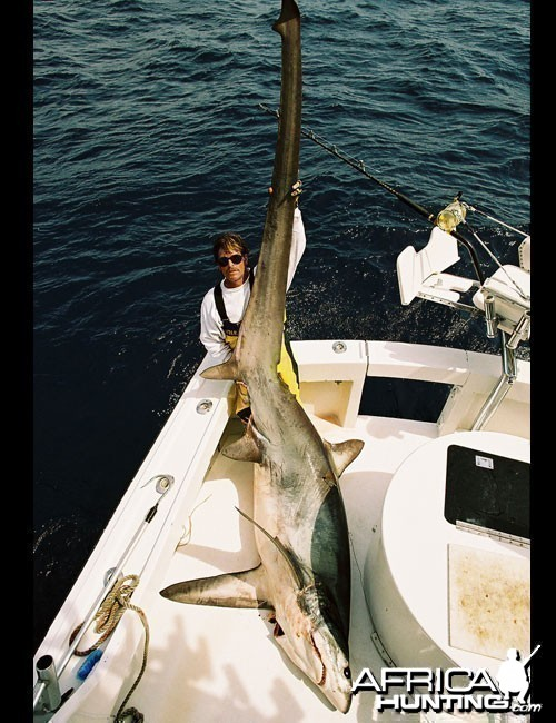 Big Eye Thresher Shark
