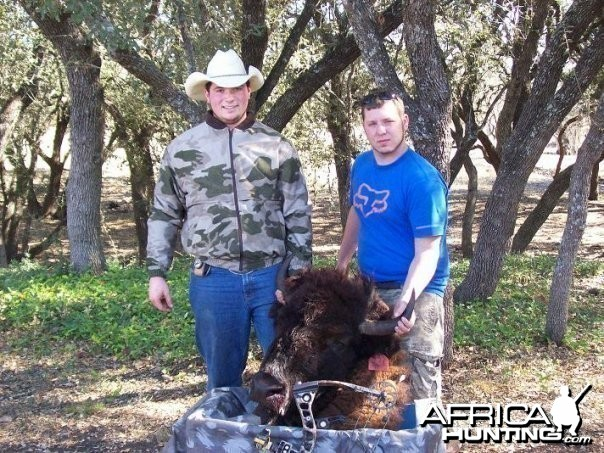 Bowhunting Bison