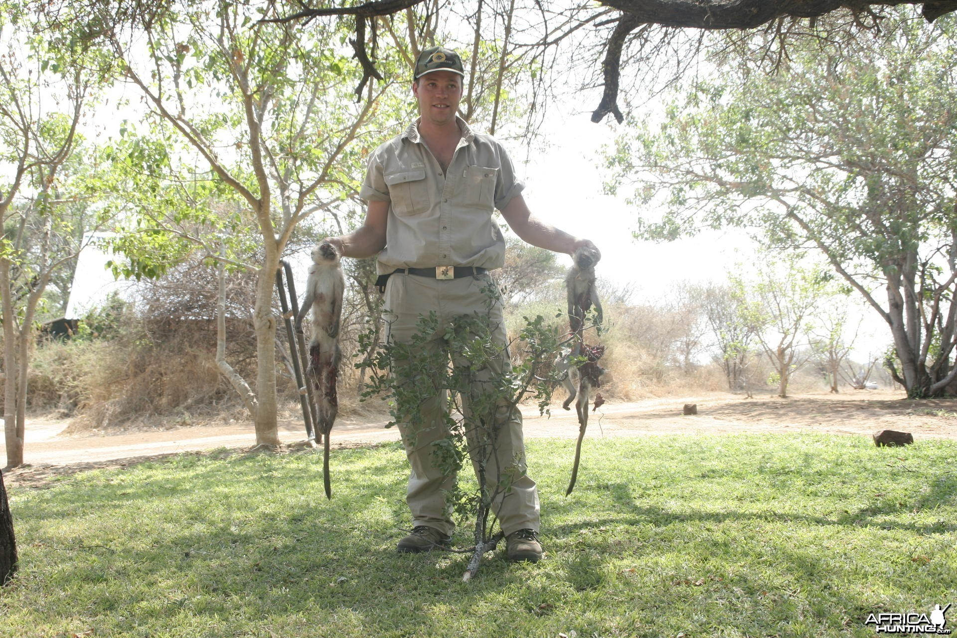 Hunting Vervet Monkey