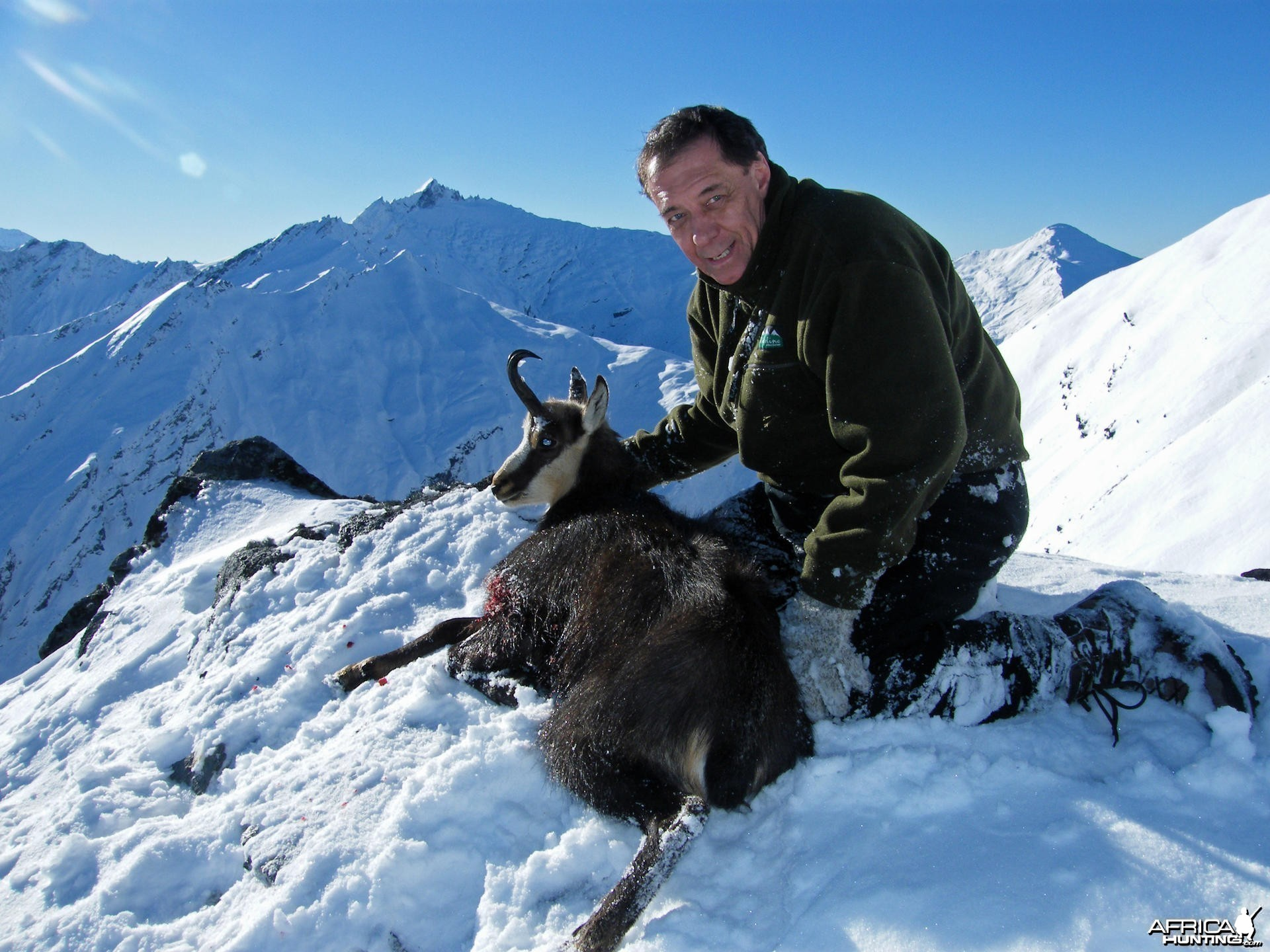 Hunting Chamois