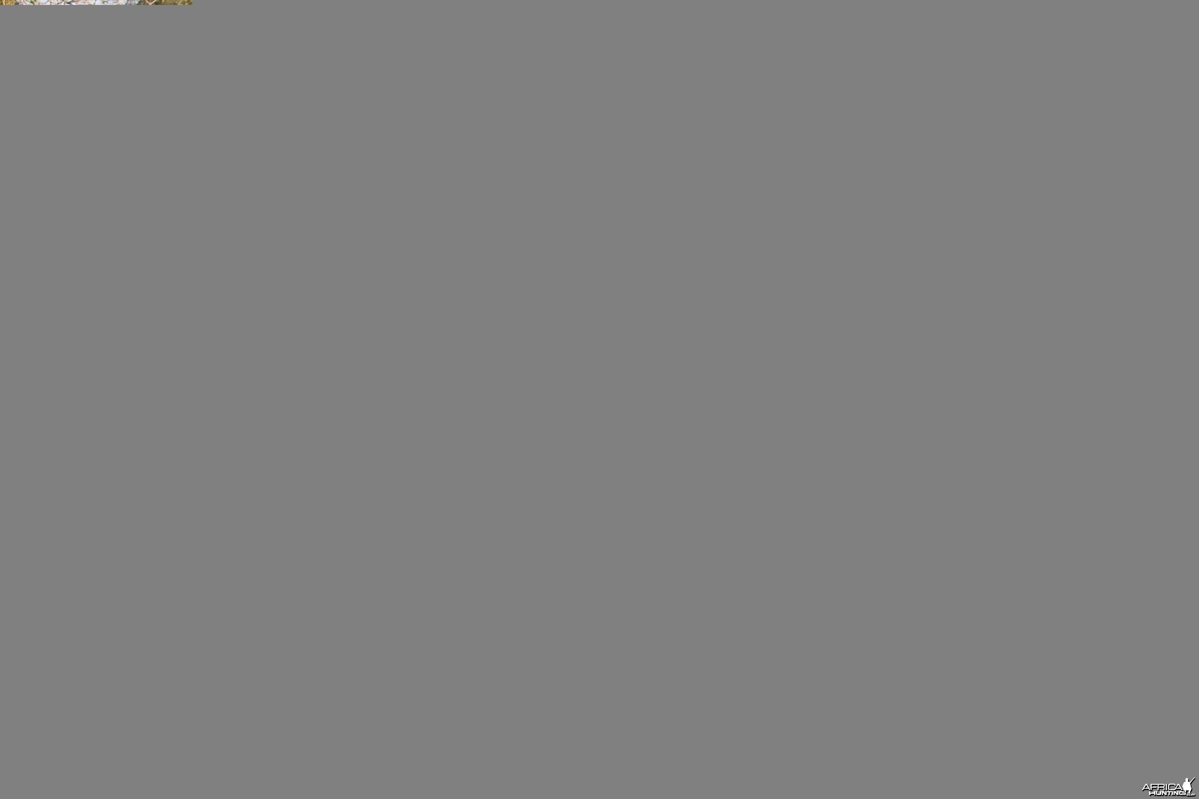 Tshukudu Cheetah