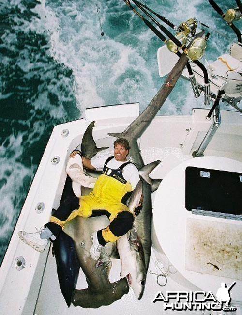 Mako Hammerhead Thresher Shark