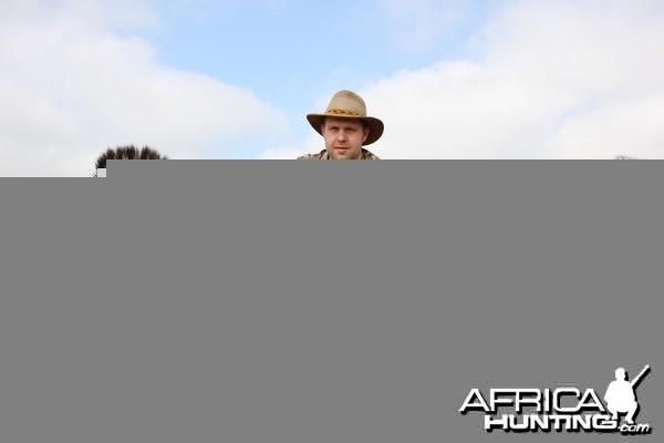 Hunting Zebra Kimberley South Africa