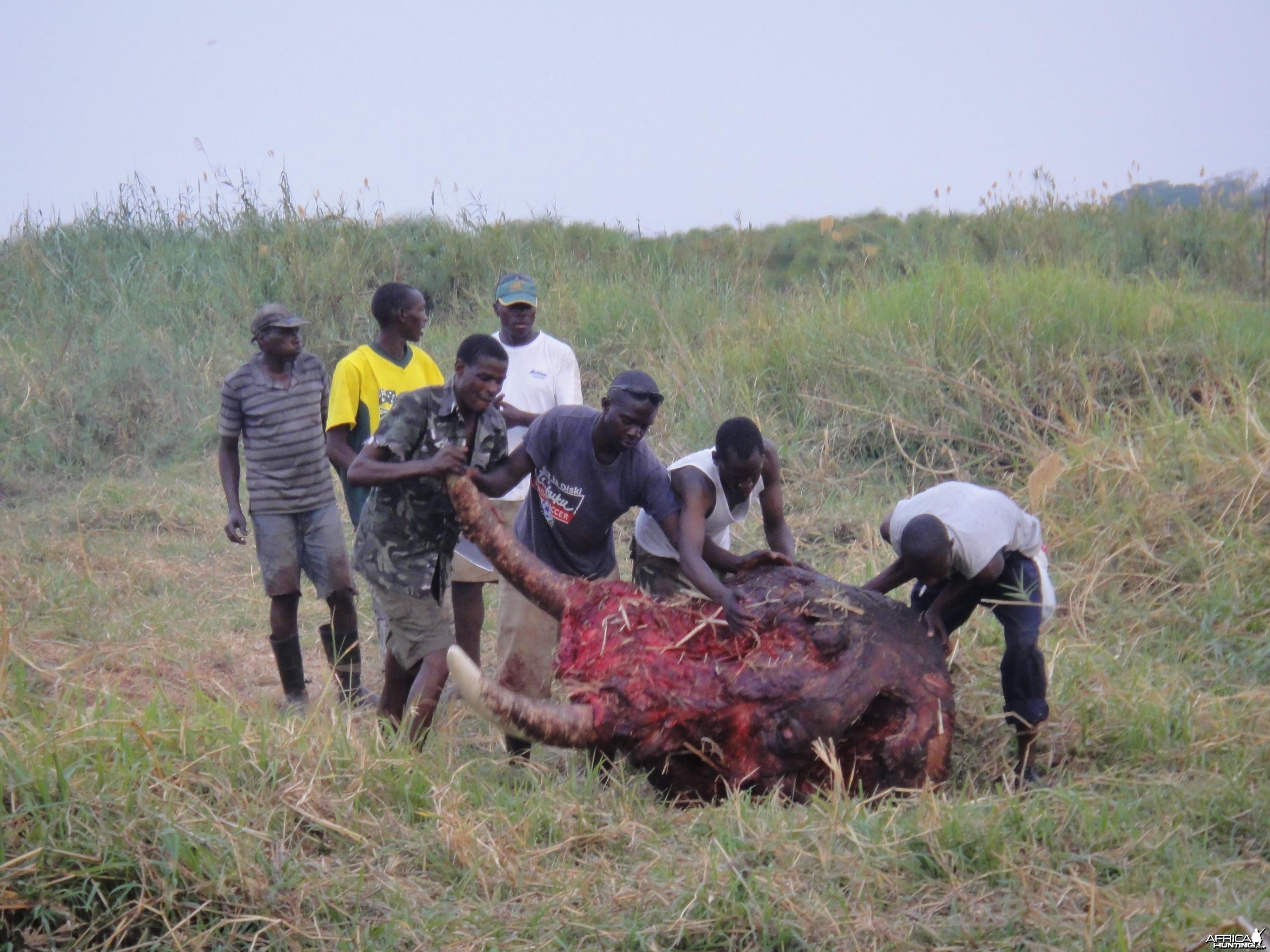 Elephant Skull Caprivi Namibia