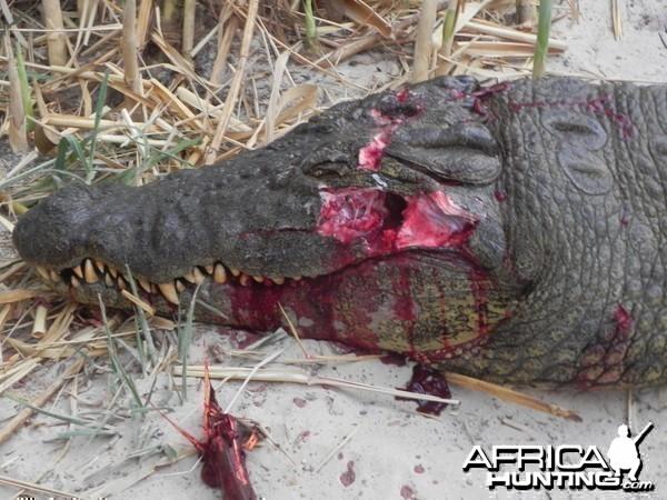 Croc Head Shot