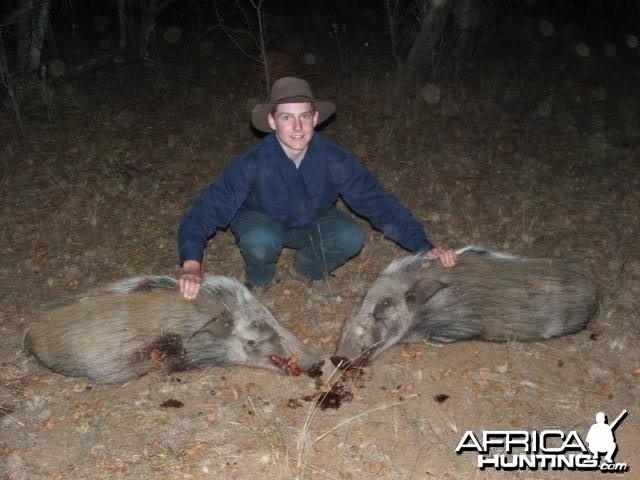 Bushpig Hunting