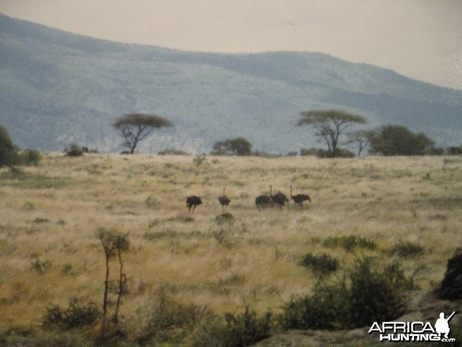 Tanzania 1985
