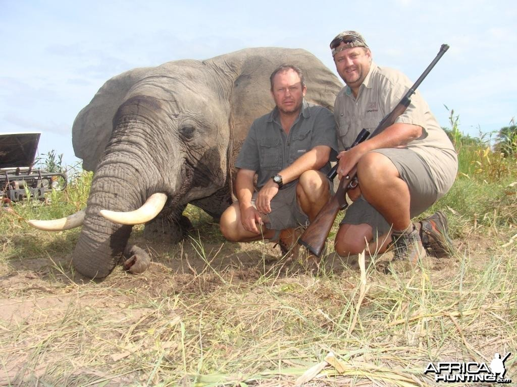 Elephant hunted by Hein Uys and client form Grootpan Hunting Safaris