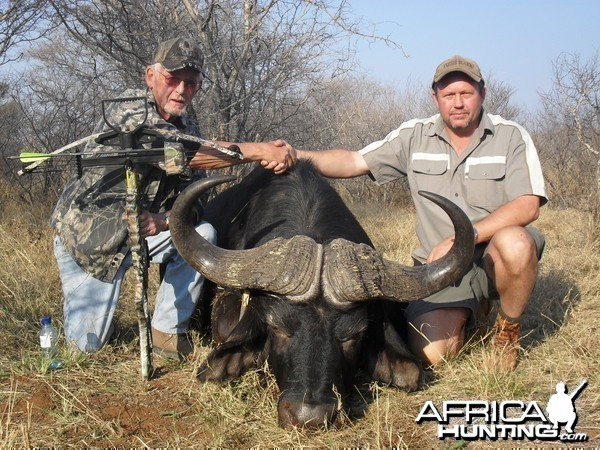 Buffalo hunted with crossbow by Grootpan Hunting Safaris