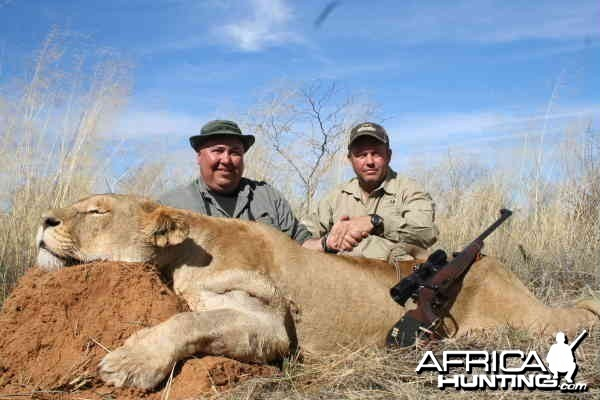 Lioness hunted by PH Hein Uys and Don Toenshoff Grootpan Hunting Safaris