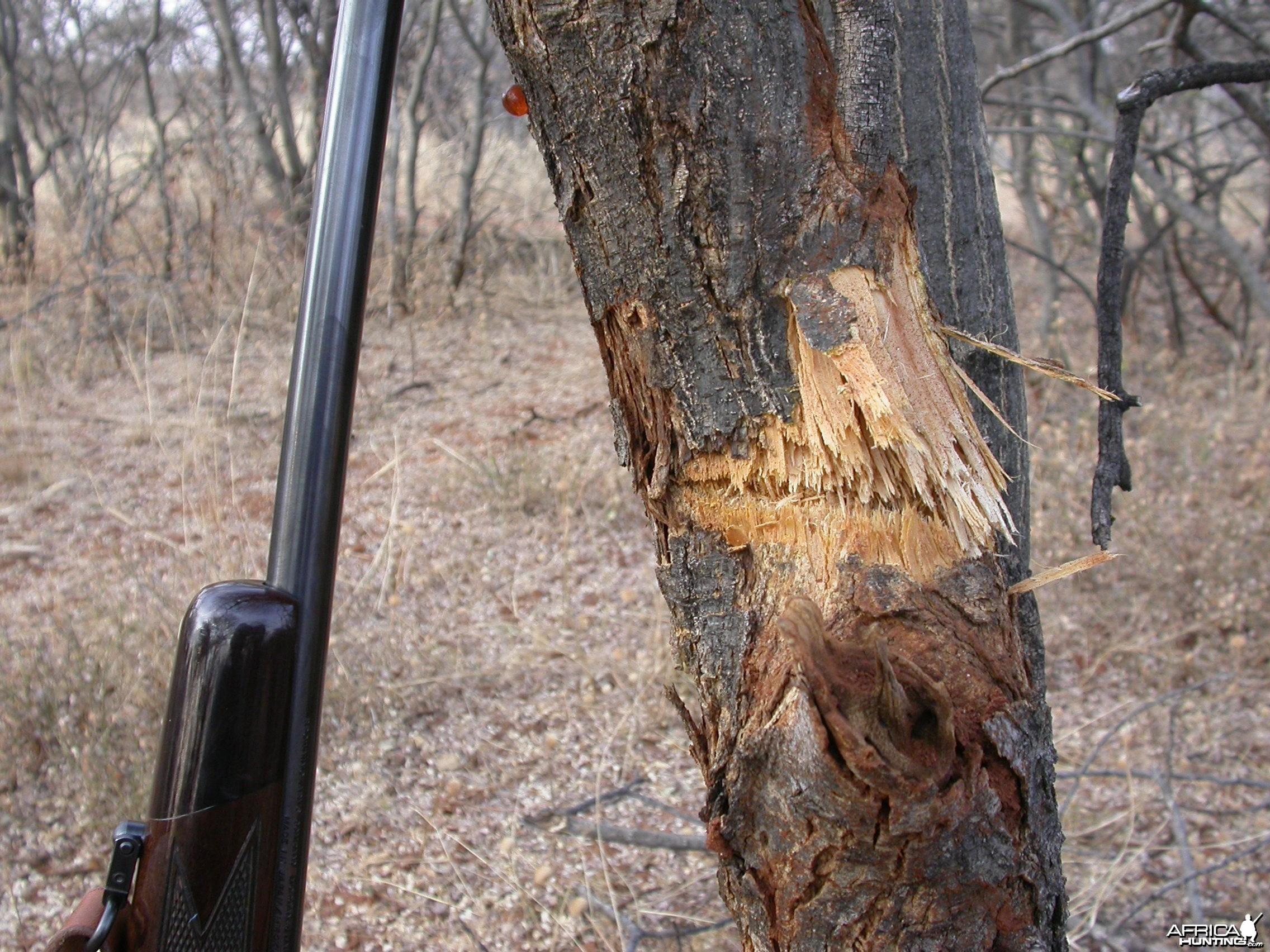 Bullet in Tree