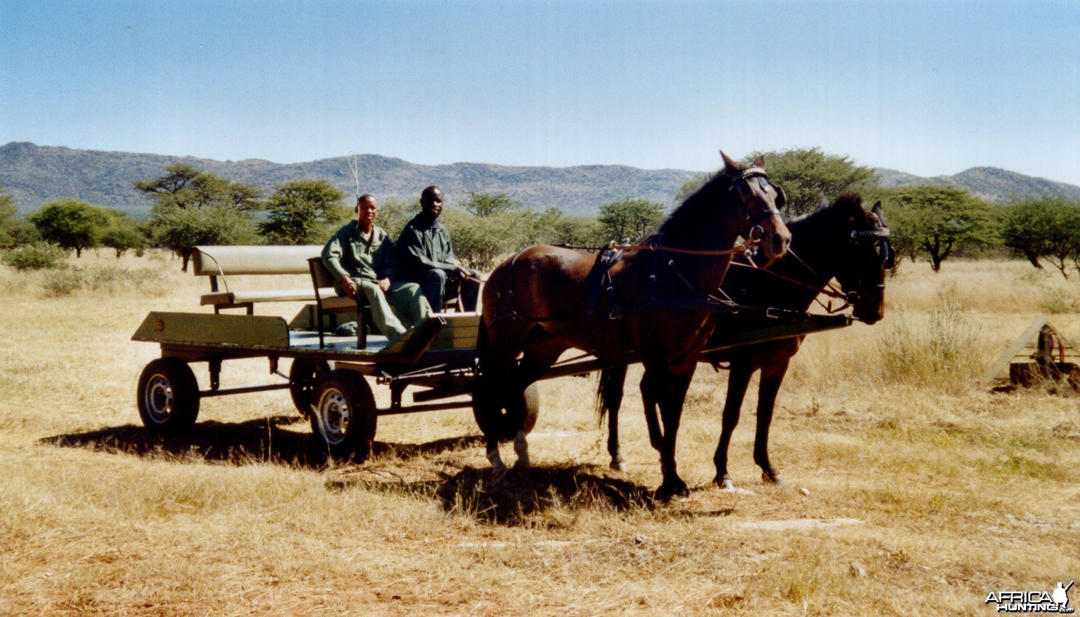 Horse Carriage Namibia