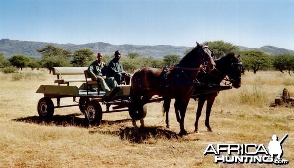 Horse Carriage Namibia