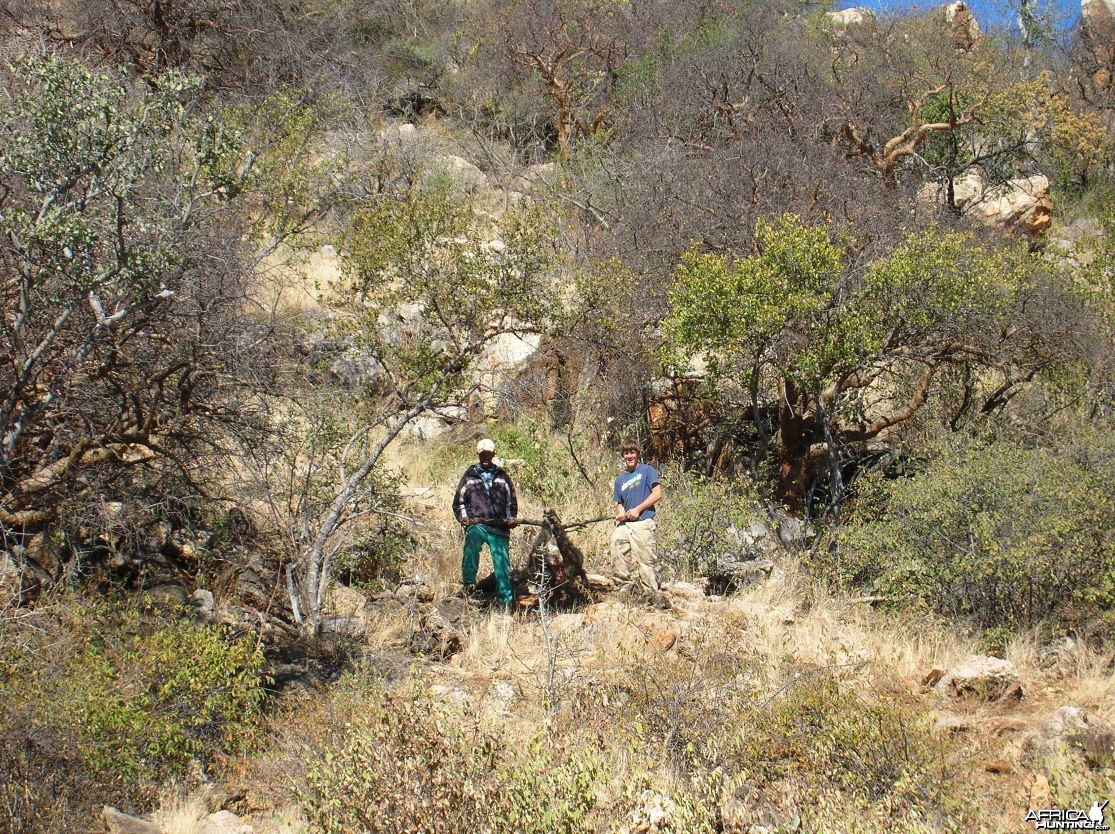 Hunting Chacma Baboon Namibia