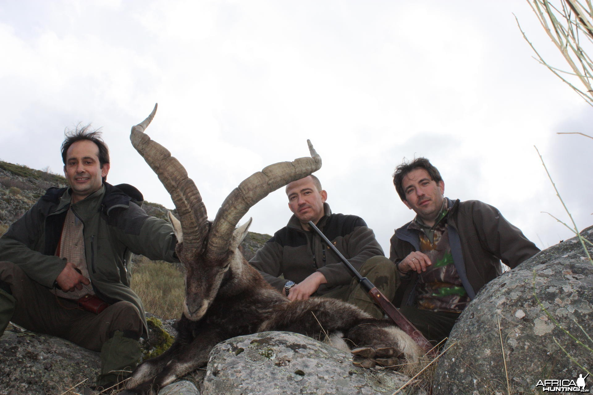 Hunting Gredos Gold Ibex in Spain