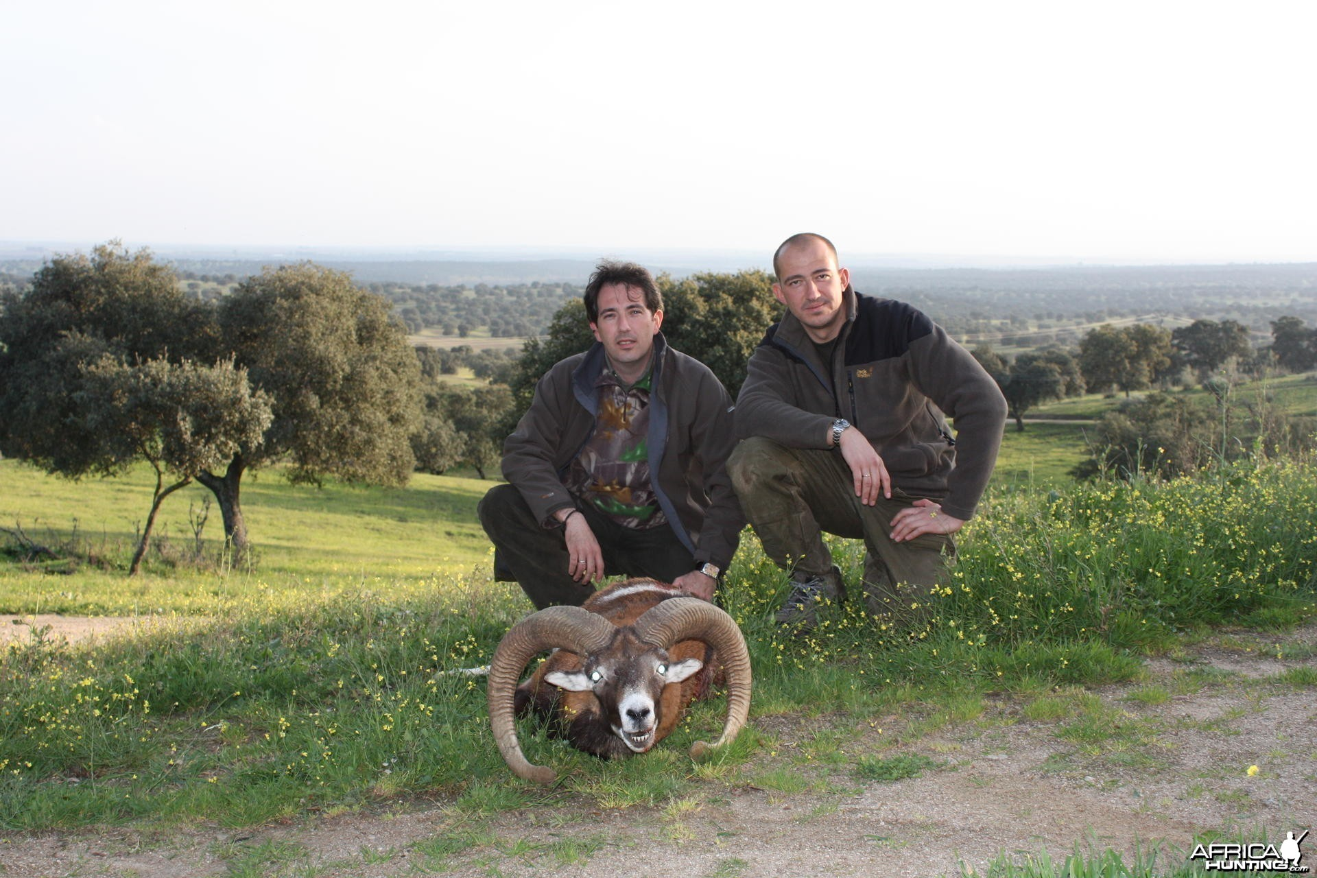 Hunting Mouflon in Spain