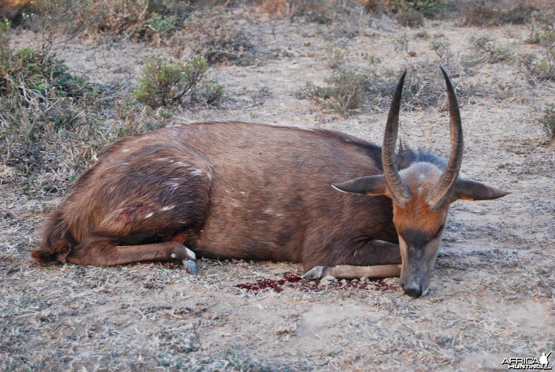 Bushbuck Hunt in Eastern Cape