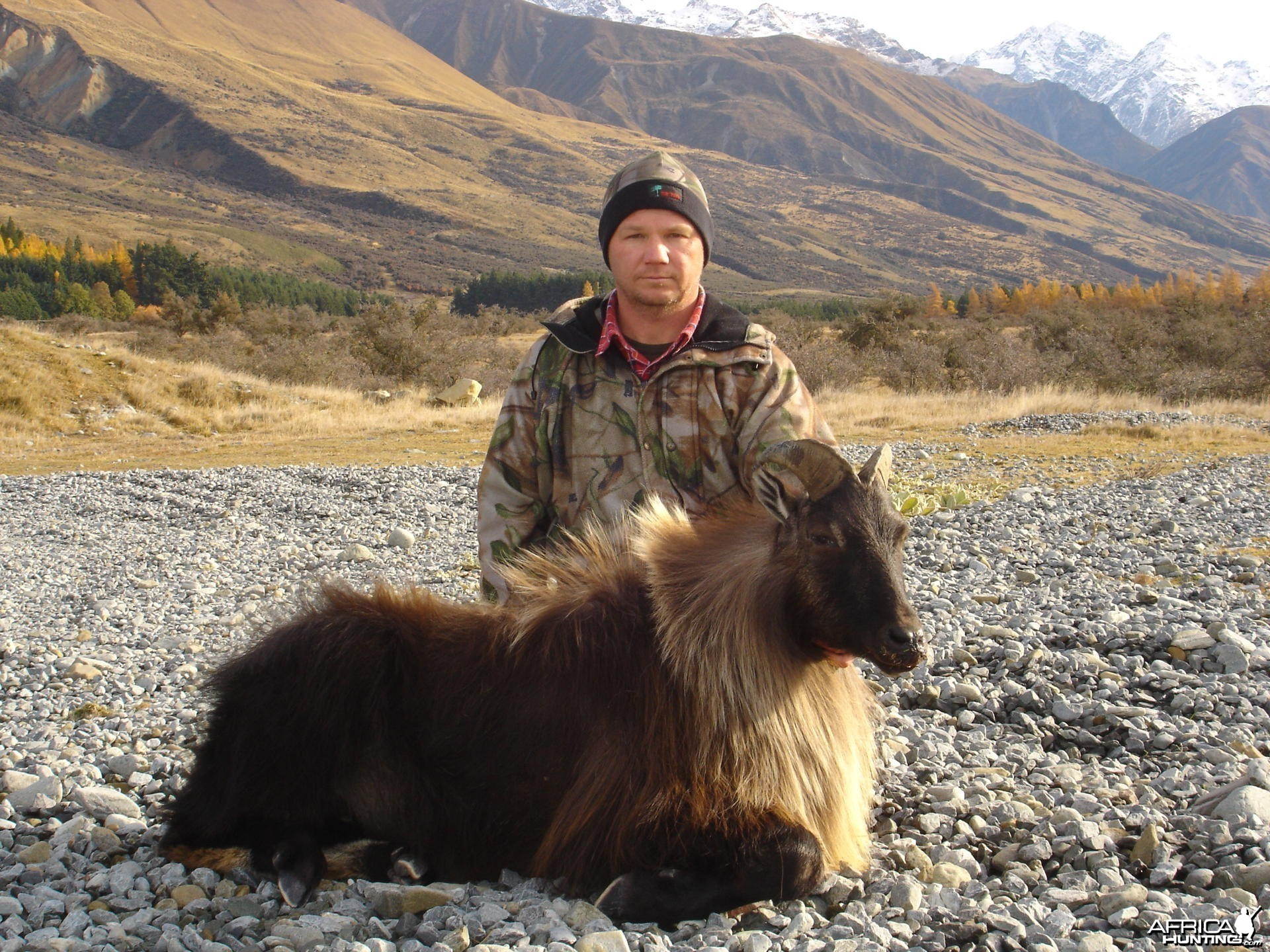 New Zealand Tahr Hunt