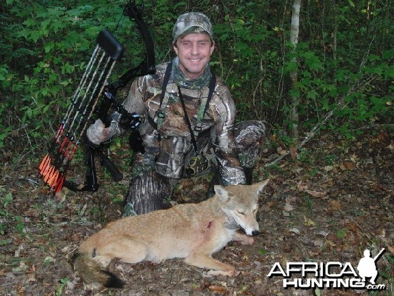 Bowhunting Coyote