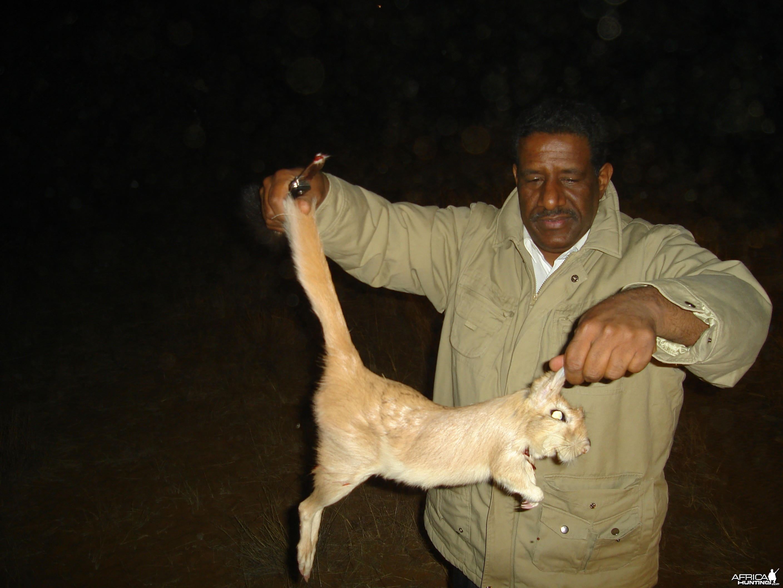 Hunting Springhare in Namibia