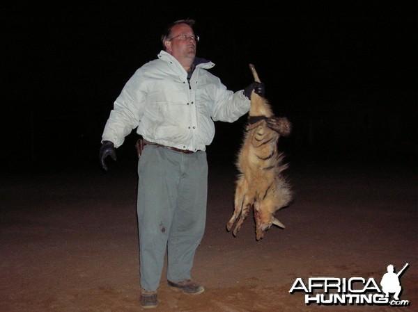 Hunting Aardwolf in Namibia