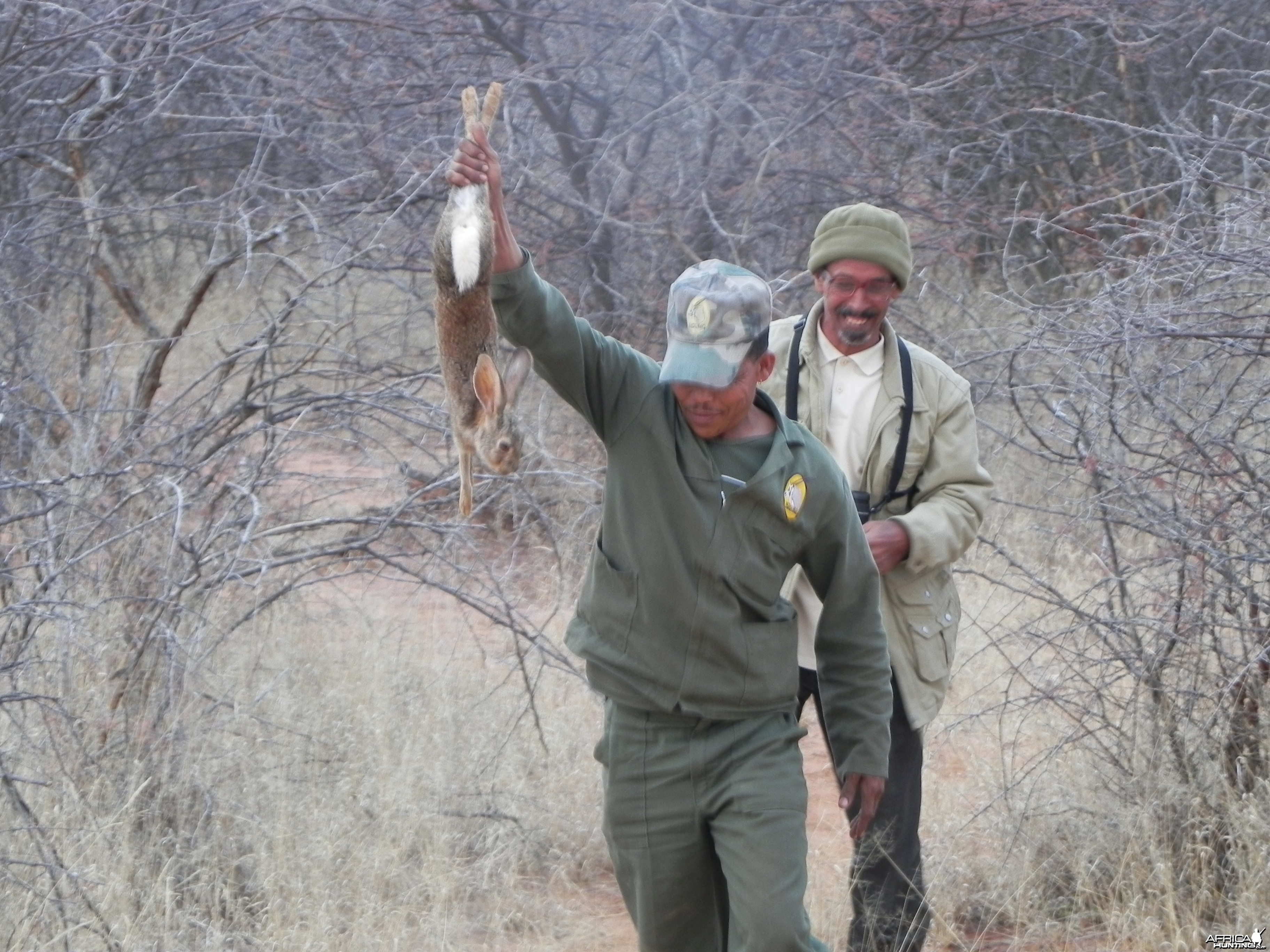 Hunting Hare in Namibia