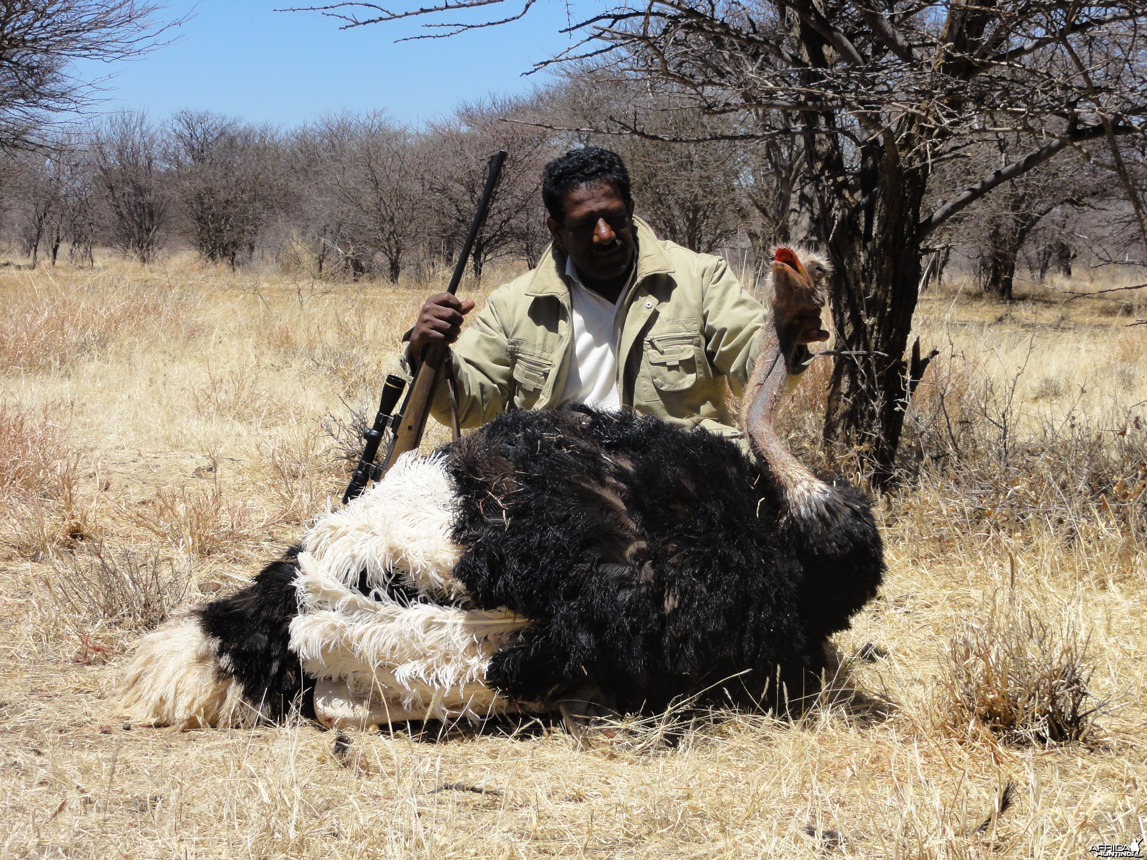 Hunting Ostrich in Namibia
