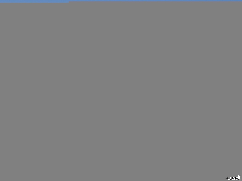Hunting Cheetah in Namibia