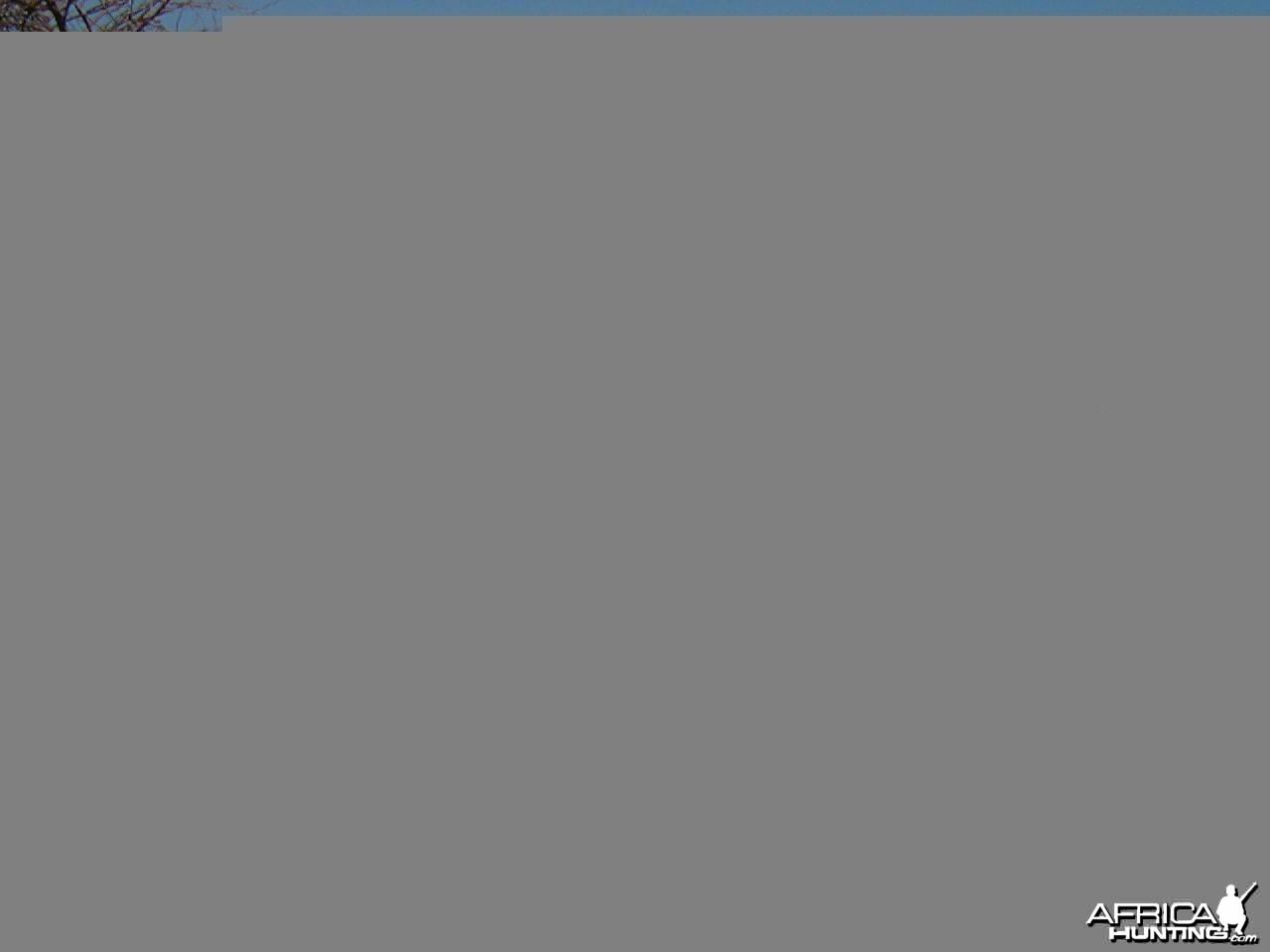 Hunting Blesbok in Namibia