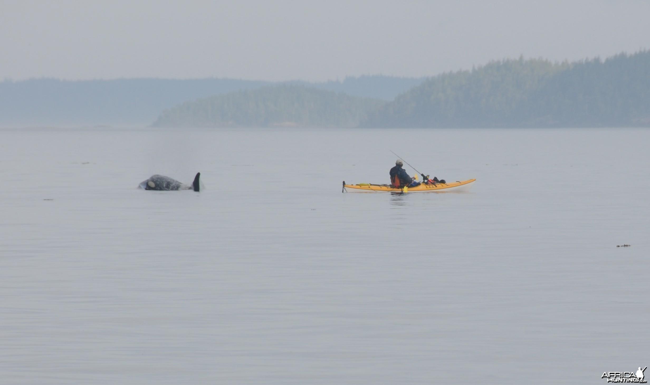 Orca Fishing