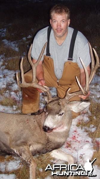 B&C Mule Deer