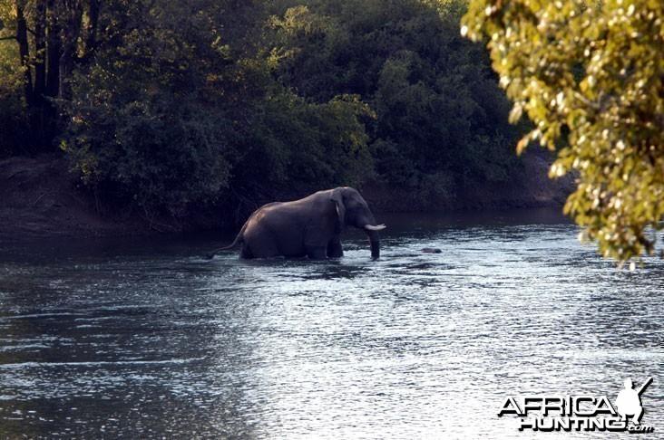 Elephant in Zambia