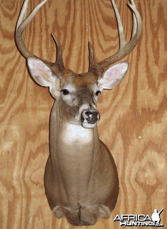 Ohio Archery Season Whitetail Deer